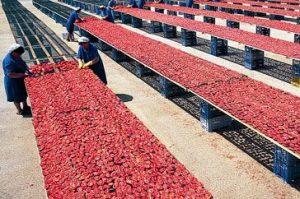 Вяленые помидоры в духовке в ароматном масле (приготовление и консервирование)