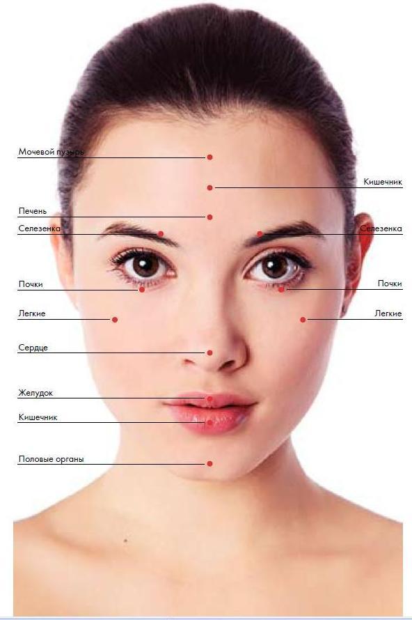 Проекция внутренних органов на лице: как определить здоровье по лицу