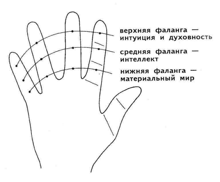 Как определить характер по мизинцу: палец Меркурия