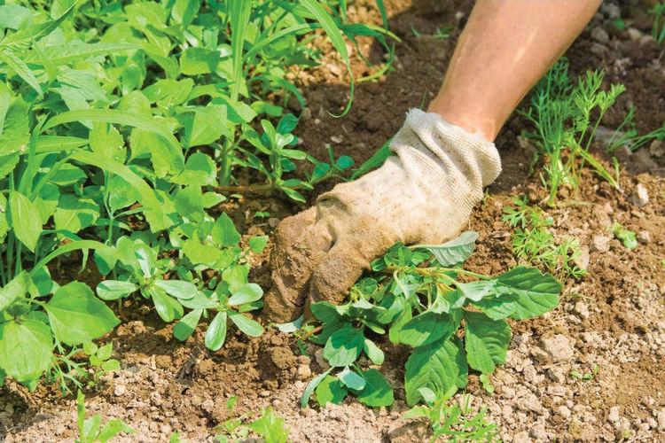 Травница Елена Зайцева: соберите 3 корня для здоровья