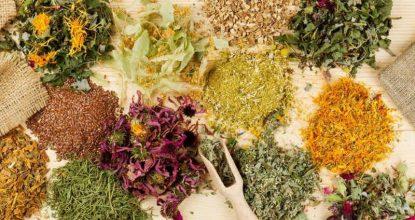 Женские травы и лечение мастопатии народными способами