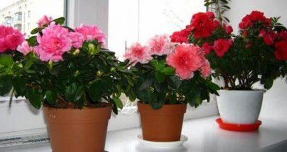 15 опасных цветов, которые нельзя держать дома