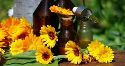 Домашняя народная аптечка: применение календулы