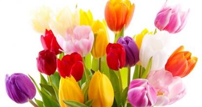 Милые и добрые! Примите поздравление с 8 марта!