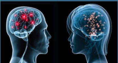 20 отличий мозга мужчины от мозга женщины