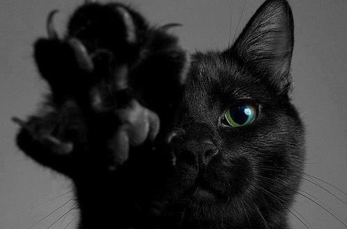 кошка от сглаза
