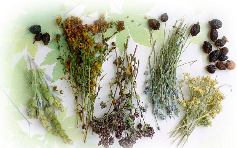Народное лечение грибка: как с помощью трав избавиться от грибка