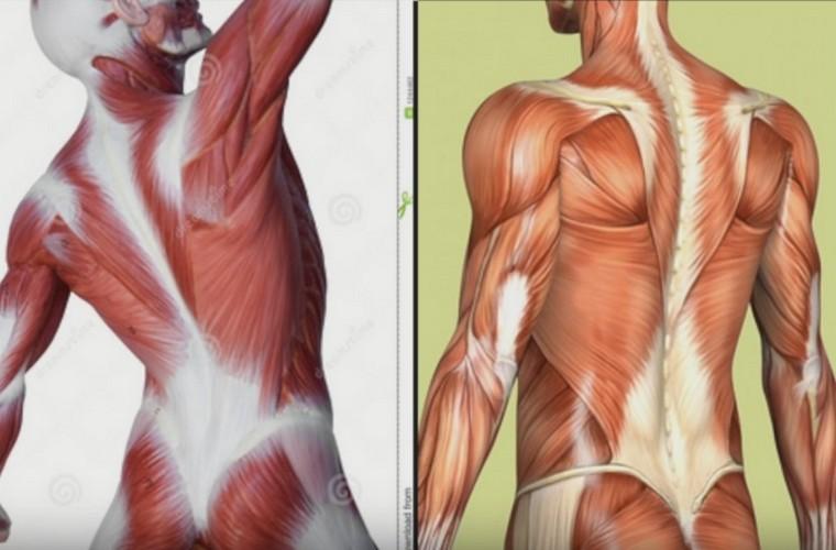 Как восстановить мышцы: домашний массаж от боли в мышцах