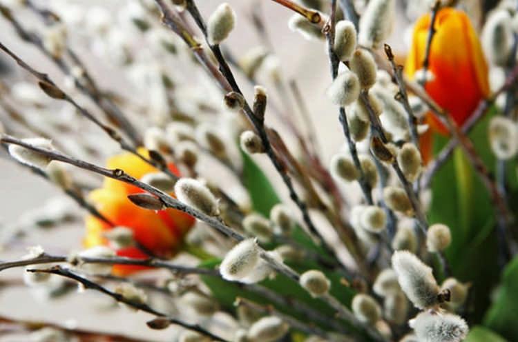 Вербное воскресенье: традиции праздника и приметы