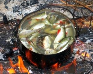 Мелкая рыба