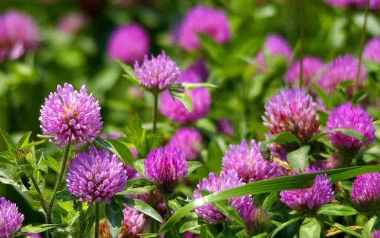 Какие сидераты лучше сеять осенью: что выбрать, как и когда их применяют