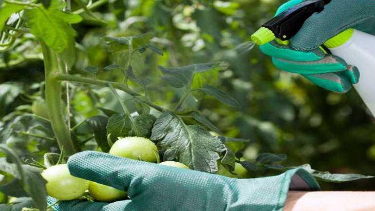 Подкормка растений бором