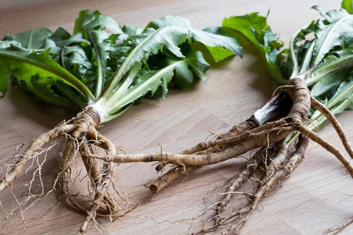 Полезные свойства чая из корней одуванчика и рецепты приготовления