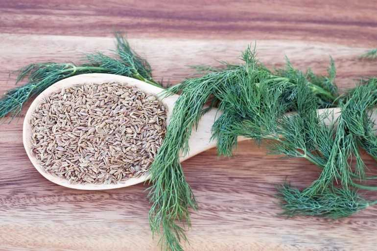 Лечение семенами укропа в домашних условиях. Народные рецепты приготовления отваров, настоек. Применение для лечения заболеваний.