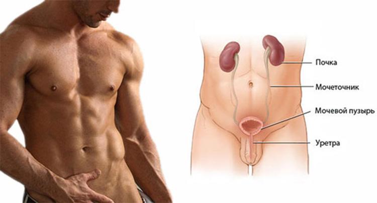 Лечение цистита при грудном вскармливании препаратами и народными средствами