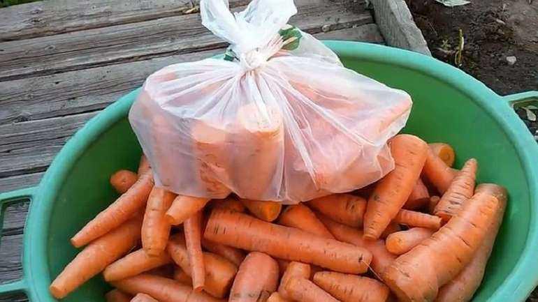 Как хранить морковь до весны