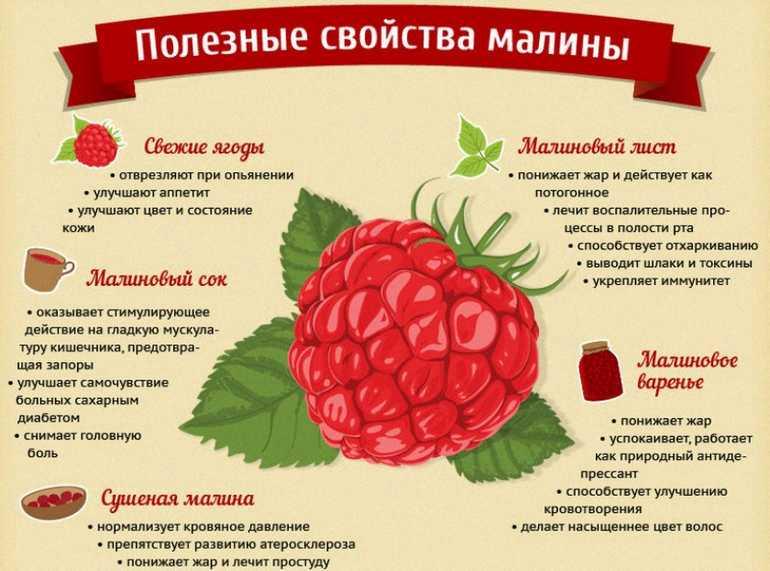 Чем полезна малина для организма и народные рецепты