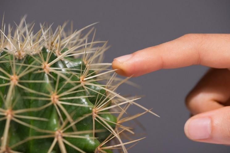 О ботанике