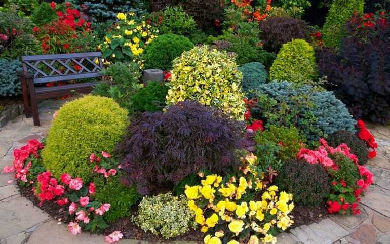 Декоративные цветущие кустарники для сада
