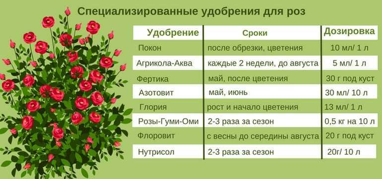 Чем можно подкормить розы для обильного цветения