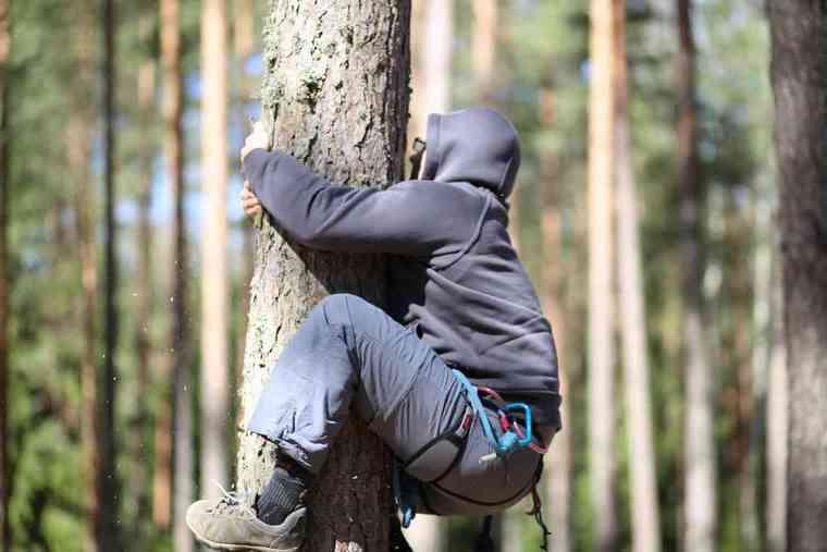 Ползком на дерево