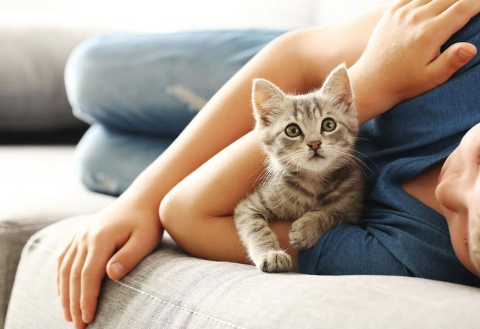 Правда ли, что кошки лечат болезни