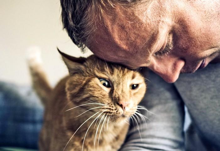 Правда ли кошки лечат болезни