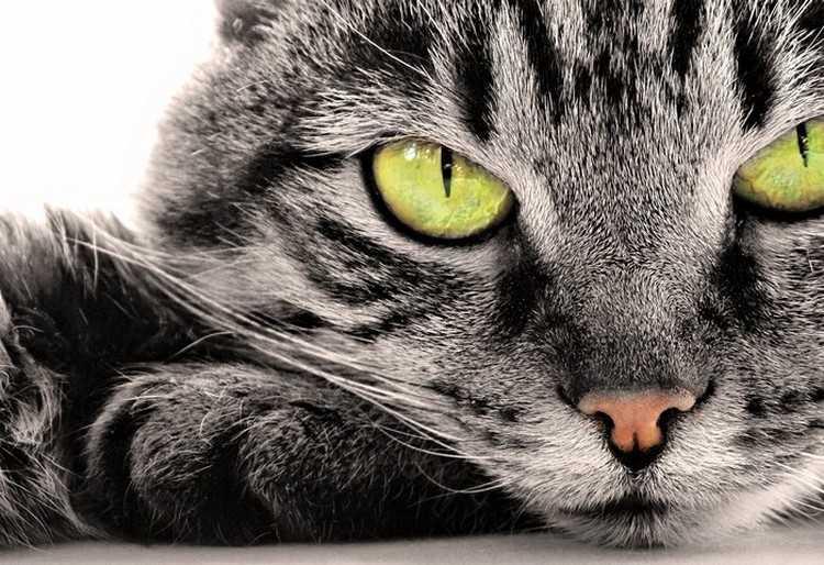 Как лечатся кошки. Что лечат кошки и лечат ли кошки болезни человека на самом деле