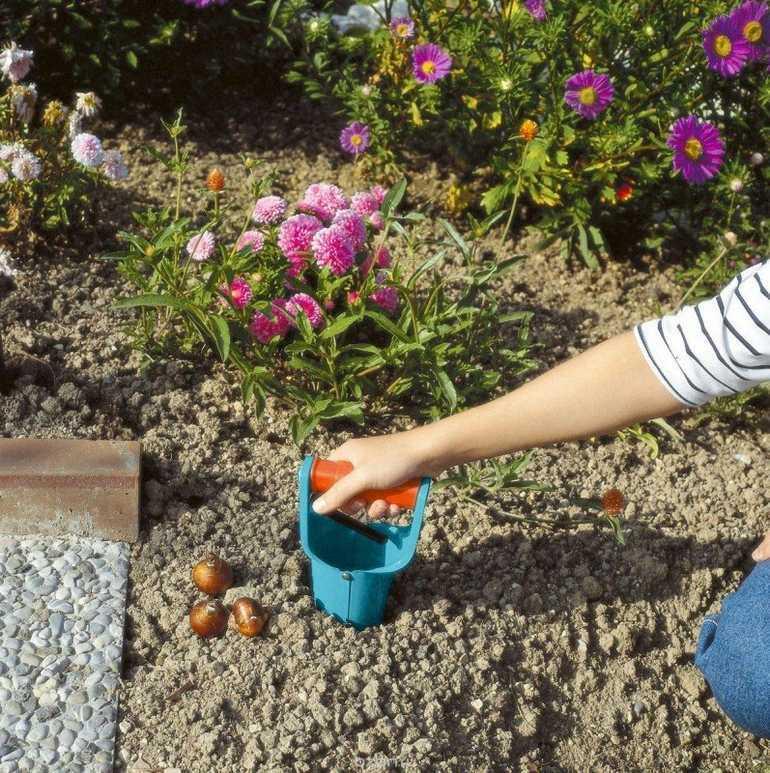Как правильно сажать тюльпаны осенью под зиму