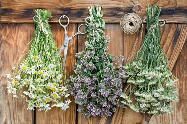 тонизирующие травы для чая