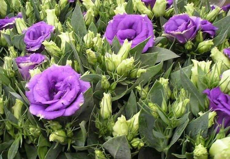 10 самых красивых цветов со всего света