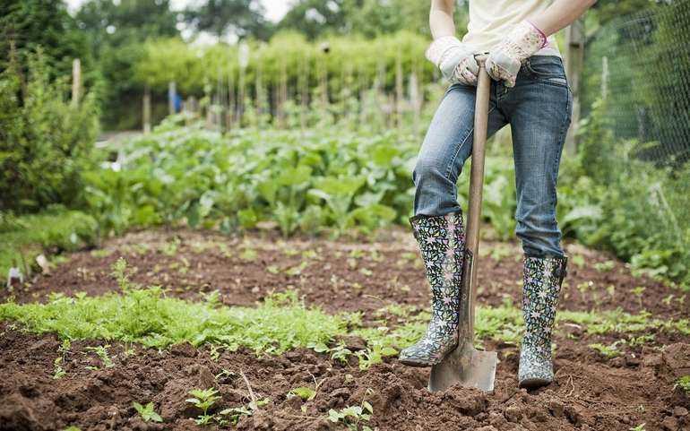 Как и чем нужно обработать огород осенью от вредителей и сорняков
