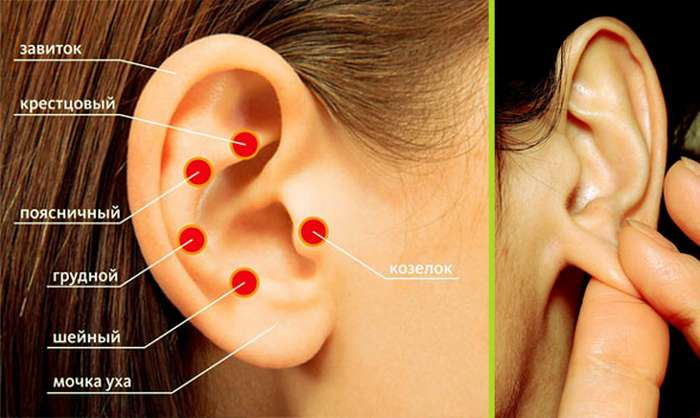 Зоны на ушной раковине