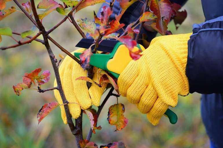 Чем обработать кустарники осенью