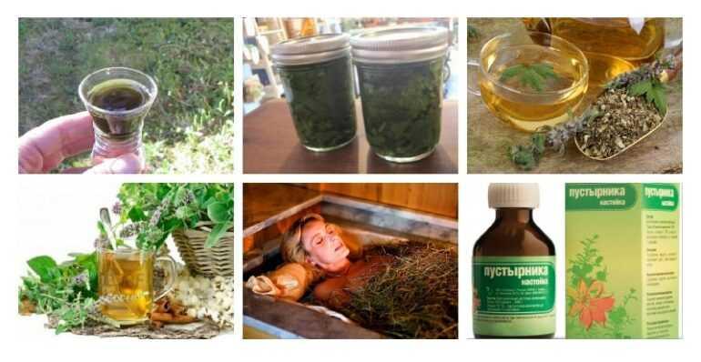 Лечебные свойства пустырника в народной медицине