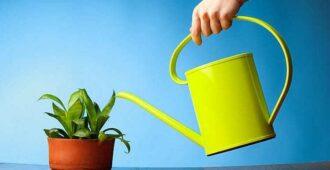 Как поливать комнатные цветы янтарной кислотой