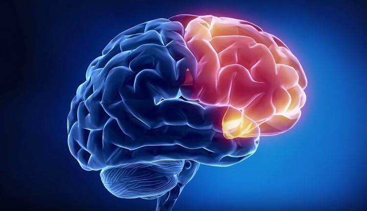 Что нужно для работы мозга