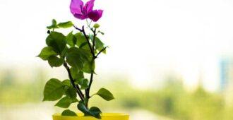 Цветы, приносящие удачу в дом