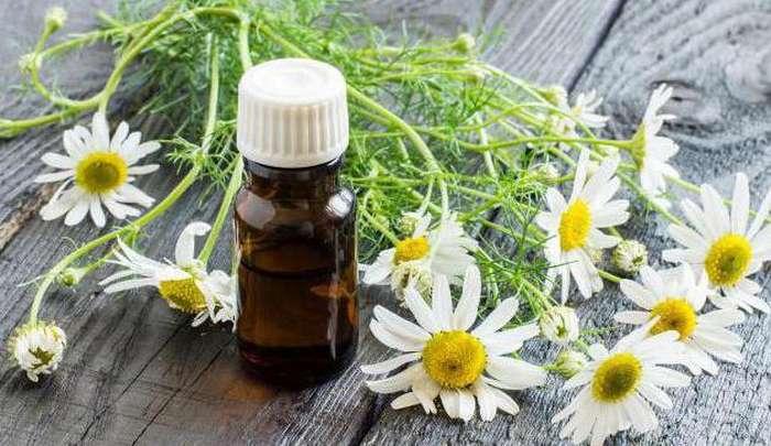 Лечебные свойства ромашки и ее применение в народной медицине