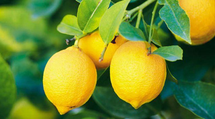 Лимон с солью для похудения, очищения, красоты и от сглаза