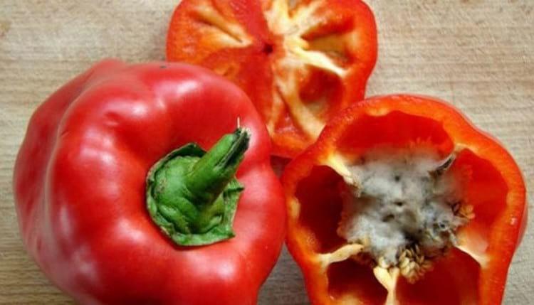 Почему плохо растет рассада перца: как ухаживать и чем обрабатывать