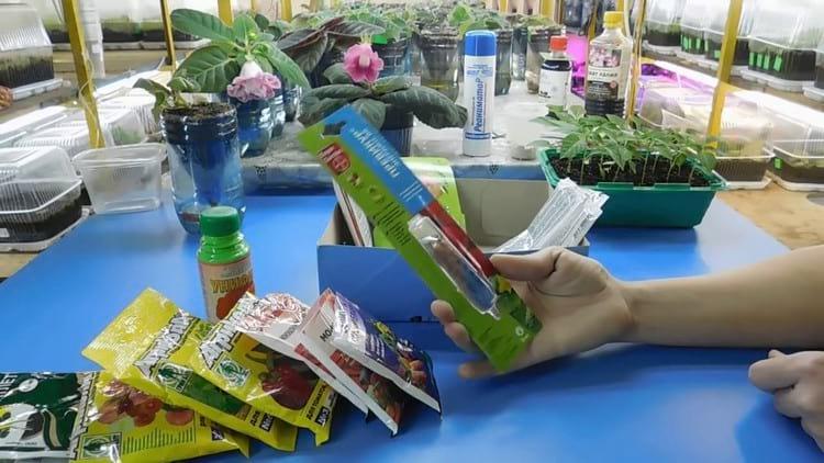 Чем подкормить комнатные растения в домашних условиях