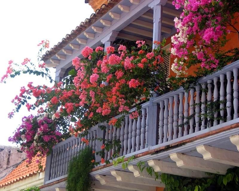 балконные цветы