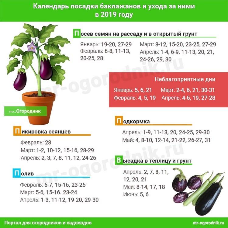 Что посадить в феврале на рассаду: лунный календарь для посадки