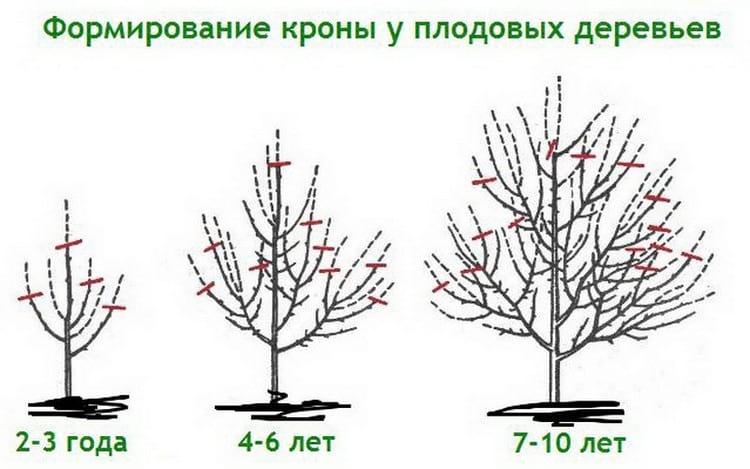 можно ли обрезать плодовые деревья осенью