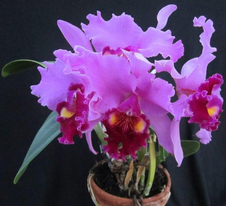 Описание, виды орхидей с фото и названием, и советы по уходу за ними