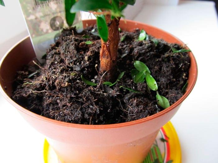 Как вернуть зеленым питомцам цветущий вид