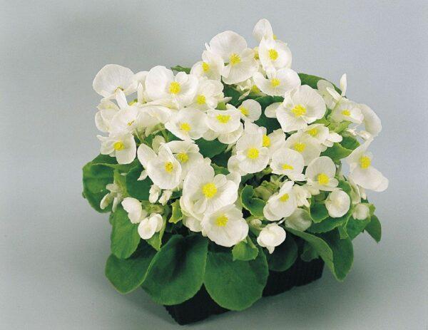 Самые неприхотливые домашние цветы для дома, балкона и офиса