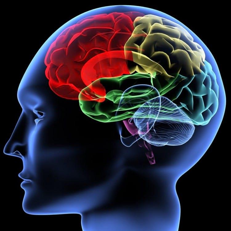 Как улучшить работу мозгаКак улучшить работу мозга
