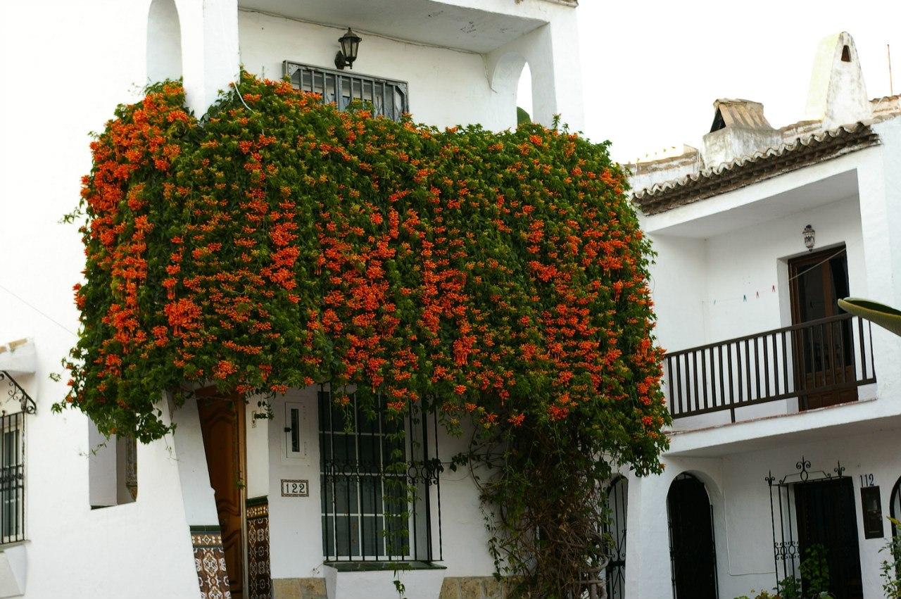 Какие цветы подойдут для роскошного балкона